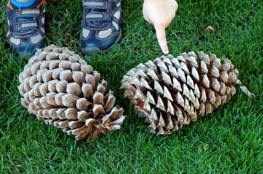 oversized pine cones